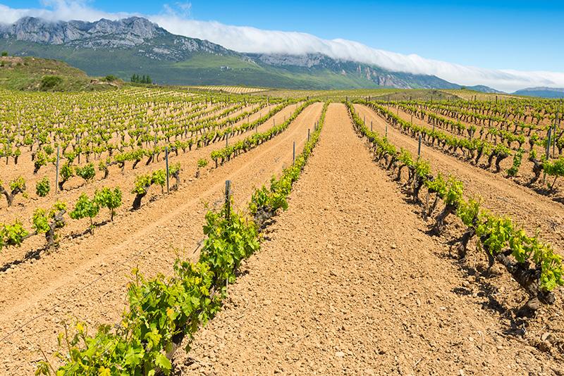 インヴィノ・ヴェリタス ヴィンゼロ・ブランコのブドウ品種